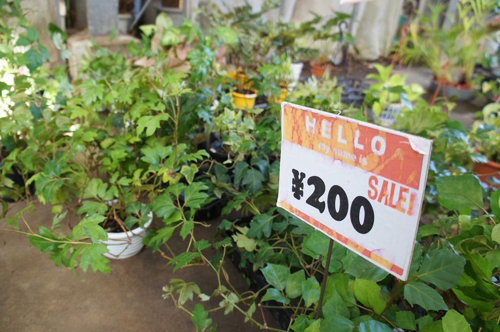 え!?この観葉植物が?って驚くビックリ価格!坂田園芸の大処分市を見逃すな!